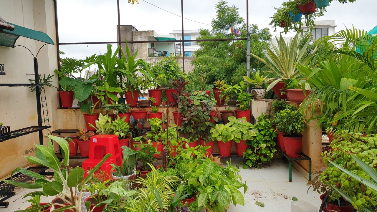 My Rainy Day Garden Works || बारिश में क्या करें || Fun Gardening