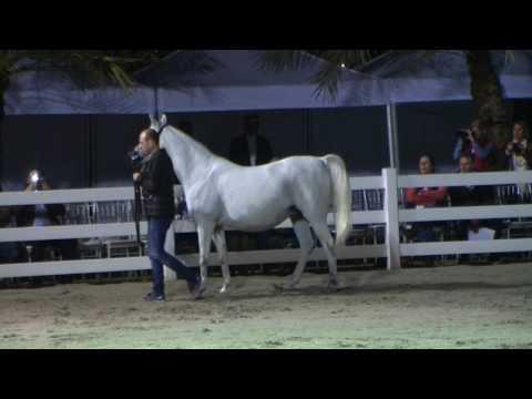 Memories of Bahrain - Part 7 - Al Rashediah Stud