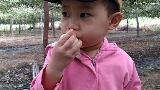Táo Ninh Thuận | Ngày nghỉ dẫn Suri đi thăm vườn táo của Bà Nội