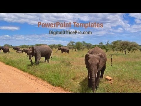 jungle elephants powerpoint template backgrounds digitalofficepro