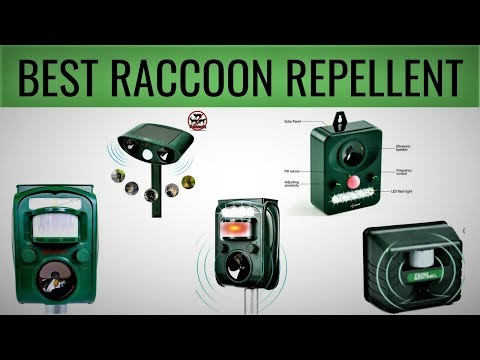 10-best-raccoon-repellent-with-price-|-unbiased-review---best-of-2019
