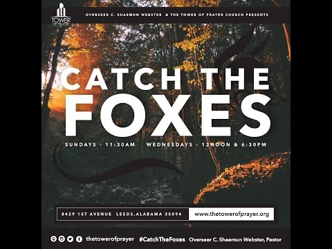 Catch the Foxes - Perseverance