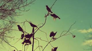 THEN BEAUTIFUL SWIFT SPARROWS LED YOU OVER THE BLACK EARTH - Zachary James, Sappho (Official Video)