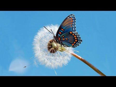 Как появляется бабочка?