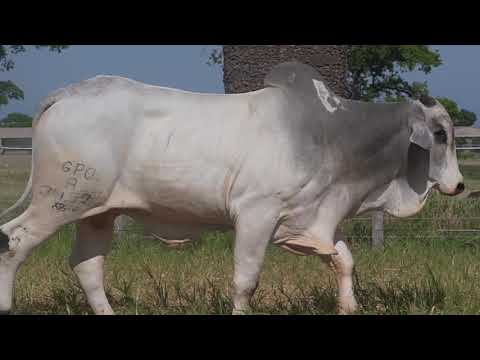 LOTE 192   GPO A 3457
