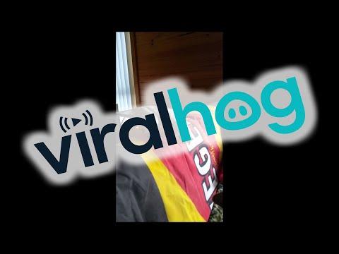 Angry Eric the cockatoo curses at his dog friend || ViralHog