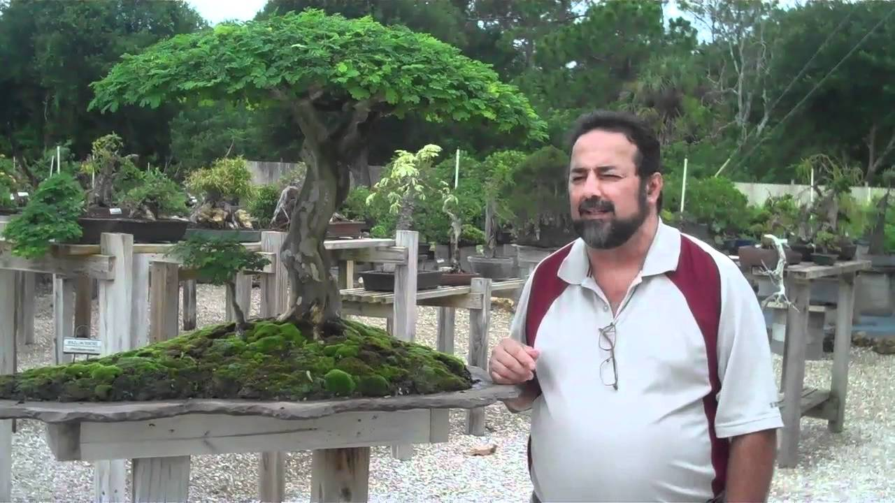 Tropical Bonsai School W Pedro Mes Wigert S Nursery