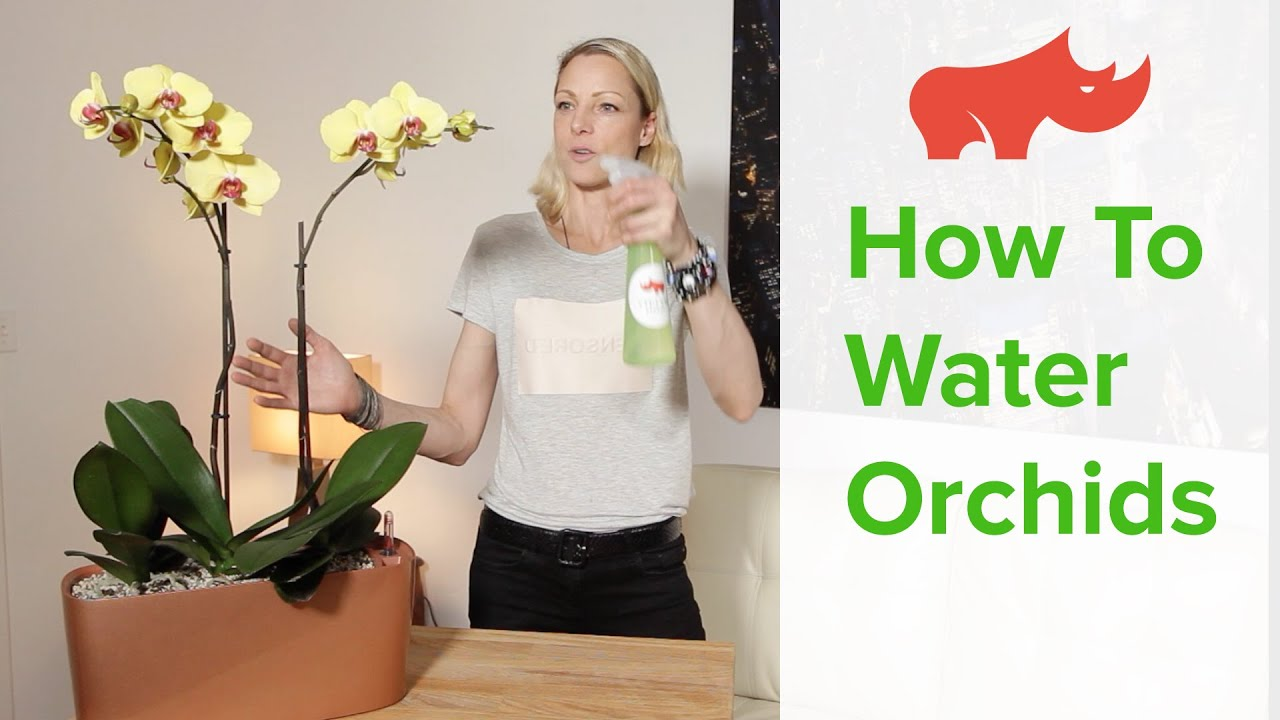 how to water orchids in self watering planters youtube. Black Bedroom Furniture Sets. Home Design Ideas