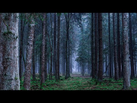 Wandering in a Fairy Forest | ASMR Ambience | Relaxation, Study, Sleep
