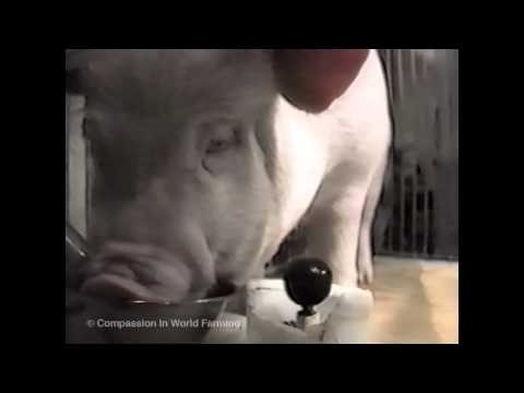 Cute Pig Playing Video Games