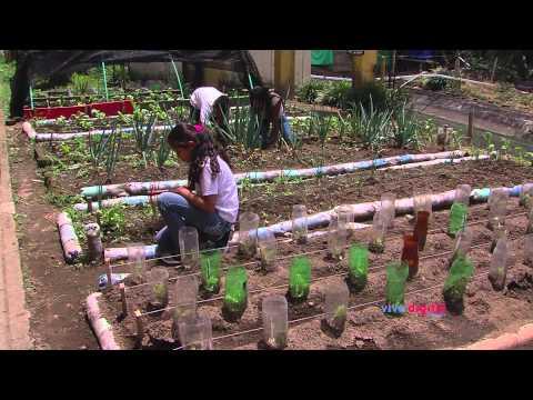 Agromatic: una app para modernizar los cultivos de hortalizas (C4 – N3)