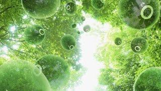 10. Фотосинтез (6 класс) - биология, подготовка к ЕГЭ и ОГЭ 2017
