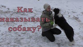 Как наказывать собаку? / Дрессировка собак