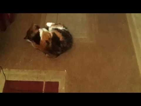Кошка хочет кота,что делать?
