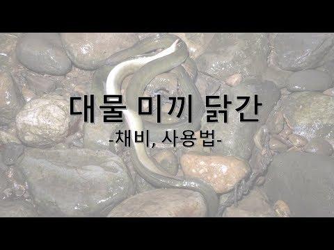 장어 낚시 기초 강좌 3편- 닭간 대물 미끼 (채�