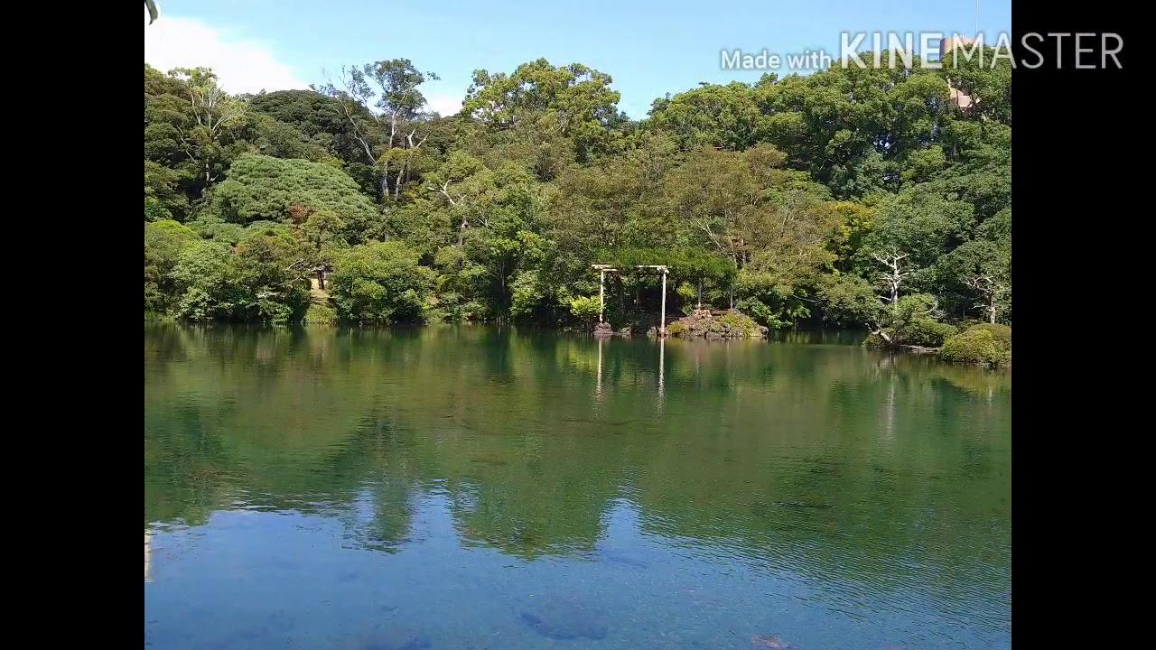 三島市立楽寿園に有る小浜池が58年ぶりに満水になりました【2】