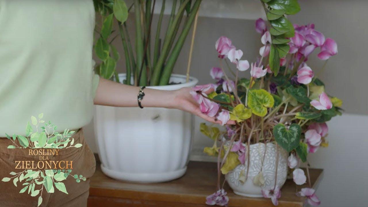 Nie miała ręki do kwiatów ale marzył jej się ogród wertykalny [Rośliny dla zielonych]