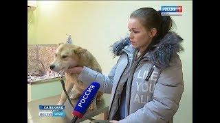 Виноваты люди, а умирают собаки. Как решают проблему бездомных животных в окружной столице?