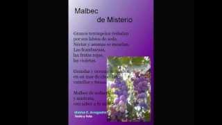 """Marisa Avogadro. Te cuento un cuento y poesías. Malbec de Misterio. Poesía """"Con sabor a Malbec"""""""