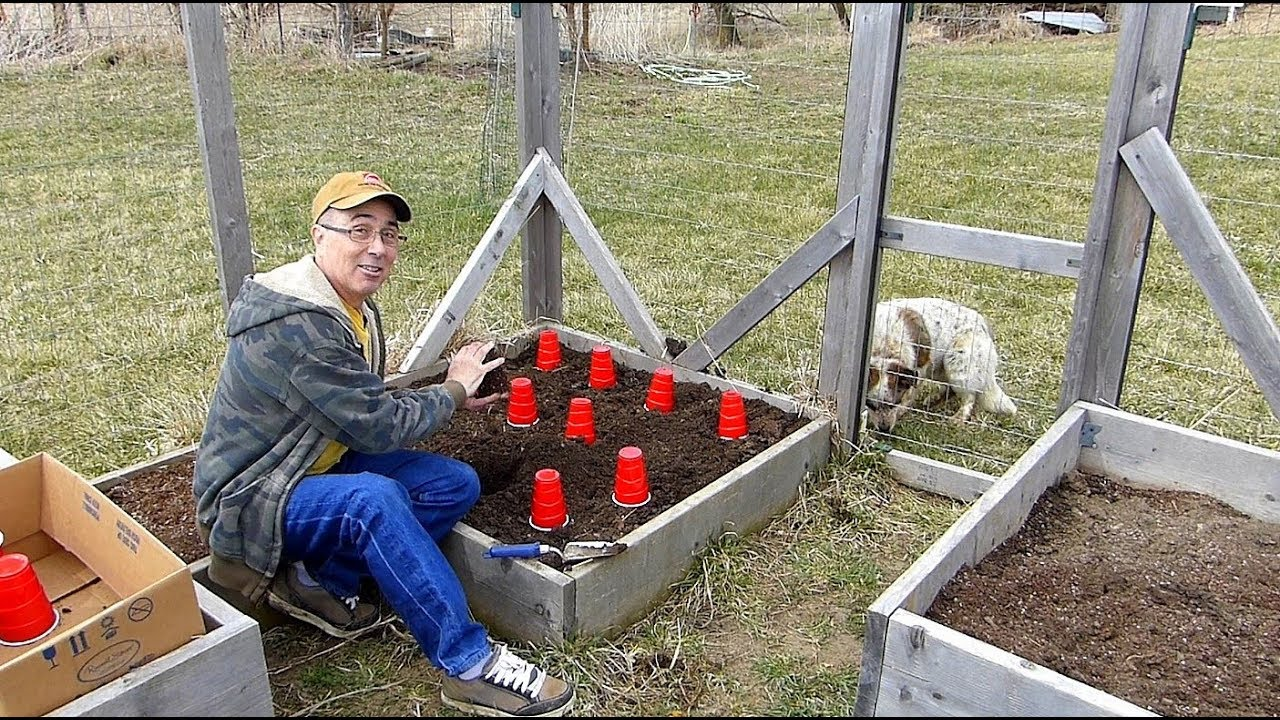 onion-planting-and-gardening-with-bunnies