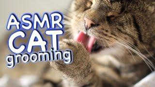 ASMR Cat - Grooming #35