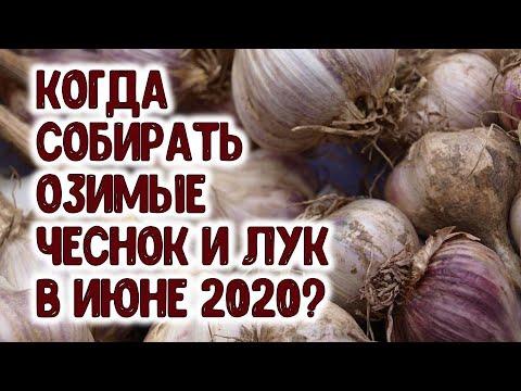 Вопрос: Когда убирать чеснок в 2020 году по Лунному календарю?