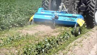 SDS 180: Bilateral Discharge Shredder in Sweet Potato