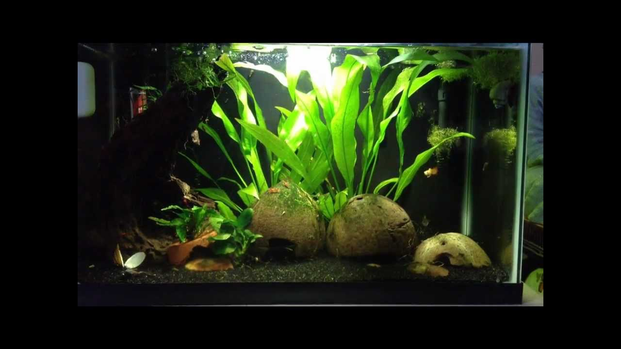 Low Light Planted Tank & Low Light Planted Tank - YouTube azcodes.com