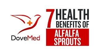 7 Health Benefits Of Alfalfa Sprouts
