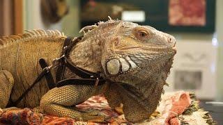 «ТерраМания 11» – межфорумная выставка экзотических животных. Часть 2