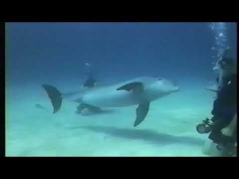 Bahamas Dolphin and Shark Dive