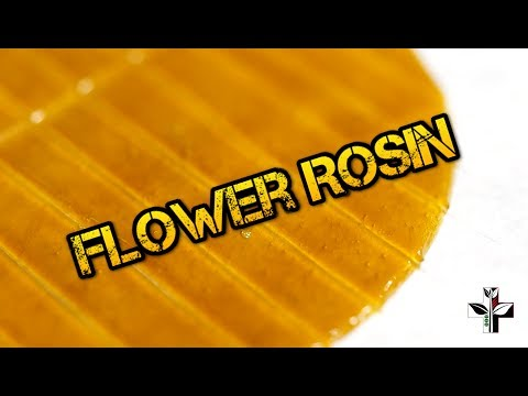 How to Press SF Flower Rosin with Powers Plates ツ