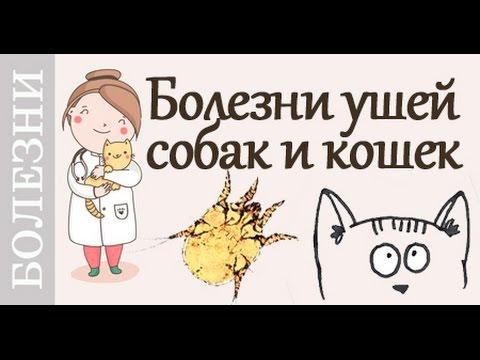 Средний отит - симптомы, лечение, профилактика, причины