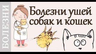 Болезни ушей у собак и кошек. #Советы_ветеринара(Виды болезней ушей кошек и собак- #отодектоз, #отит, грибок. Признаки и #лечение_болезней_ушей. 00:28 #Симптомы_о..., 2016-04-14T17:11:47.000Z)