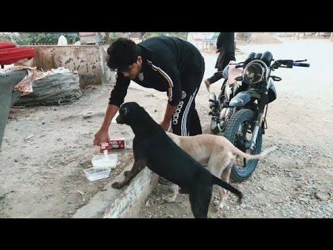 FEEDING STRAY DOGS  🐕