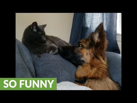 Dog and cat expertly showcase Instagram vs. Reality