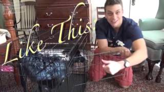 [How To Dog Care] How to Potty Train & Crate Train a Puppy OR Dog