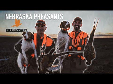 Nebraska Pheasants: The Journey Within - A Bird Hunter's Diary   Mark Peterson Hunting