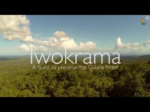 Iwokrama...a Quest to Conserve the Guiana Shield