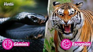 ¿Qué animal eres según tu signo? Descubre tu personalidad