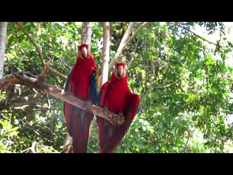 Me enamoré de Roatan, Honduras - I love travel 2017