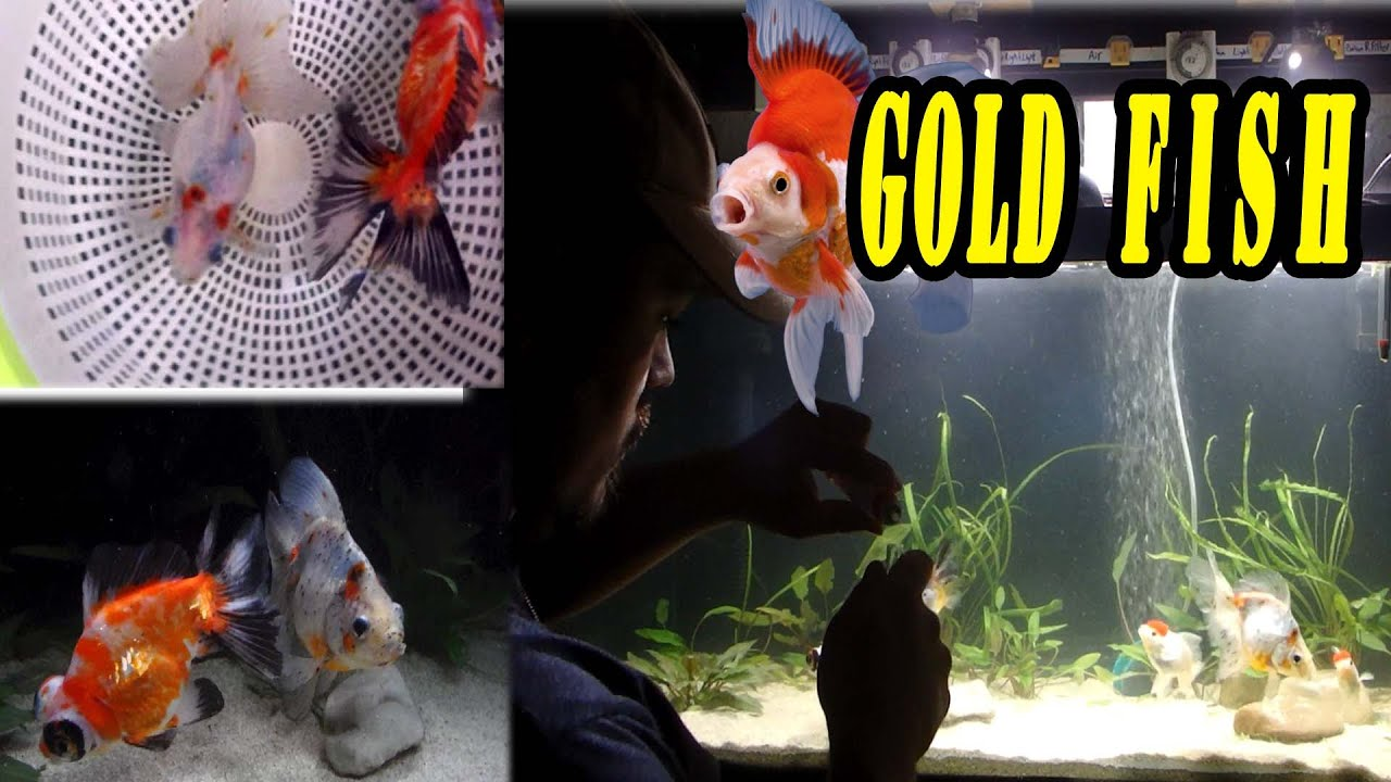 Why Is My Goldfish Tank Cloudy Home Design Ideas