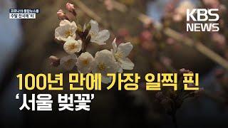 100년 만에 가장 빠른 서울 벚꽃…'보통 날씨' 기준…