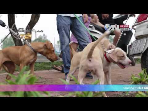 Pets vietnam Phía sau loài chó ✔360✔  sát thủ  máu lạnh 8h15p tối   Truyền hình An Viên Thích chó ✔3