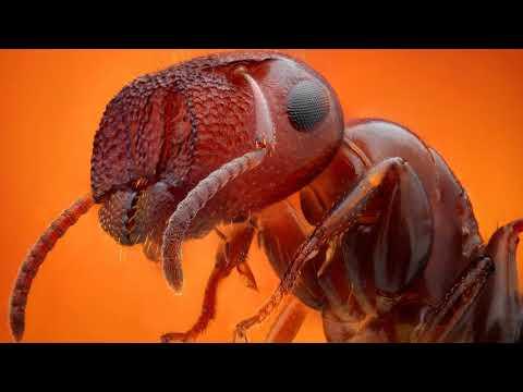 Как вывести муравьев в квартире навсегда народными средствами