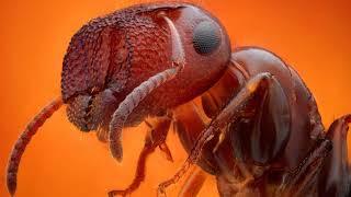 видео Как избавиться от муравьев в доме народными средствами