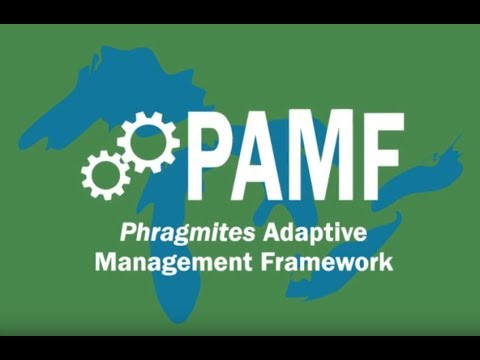 PAMF Participation Cycle