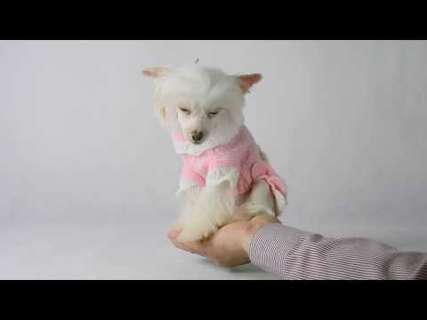 DOG+DIVA pet model micro sized Chinese Crested Princess Kendra