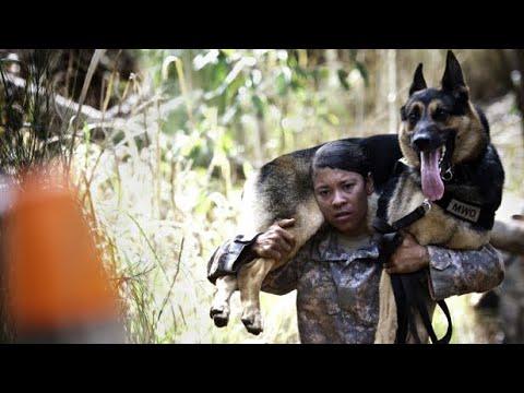 2012 Hawaiian Islands Working Dog Competition