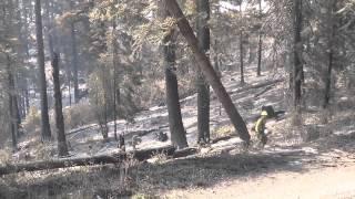 Falling Hazard Trees, Idaho 2012